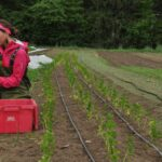 Research and Education Drive Vermont's Farm & Food Economy