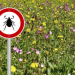 Vermont Now One of Top 3 States for Lyme Disease