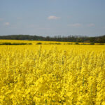 Jobs in Bioenergy Industry Showing Slow But Steady Growth
