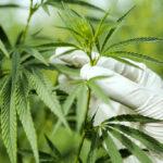 Medical Cannabis Online Program