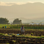 UVM Online Course Explores Food and Social Justice in Oaxaca