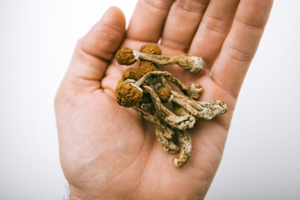 UVM Adds Psilocybin to Cannabis Certificate