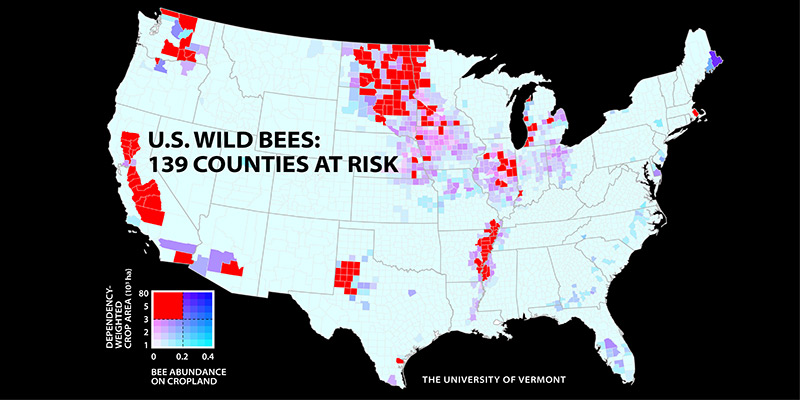 bee-decline-threatens-crop-production