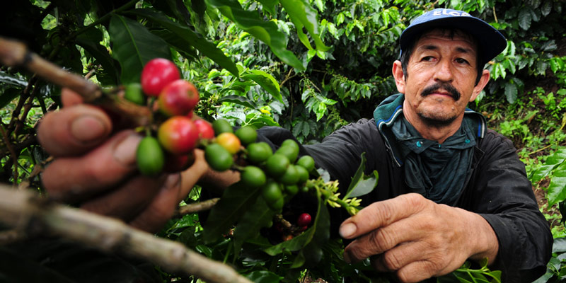 climate change affecting coffee