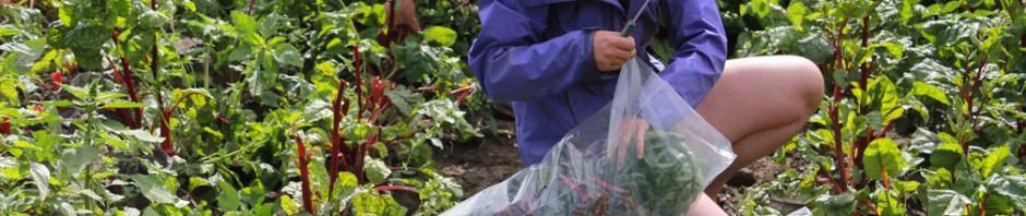 vermont-foodbank-gleaning