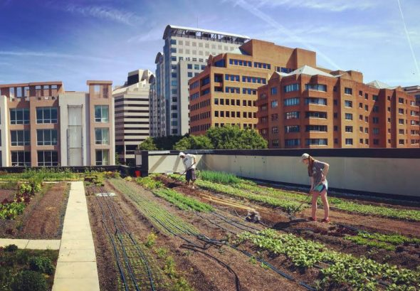 rooftop-farms