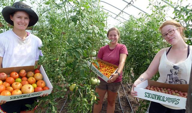 Organic Farm 2012