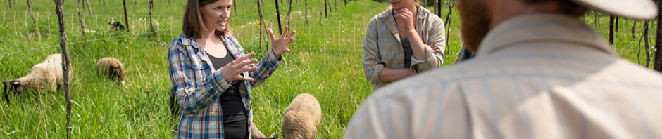 integrating sheep in vineyard systems