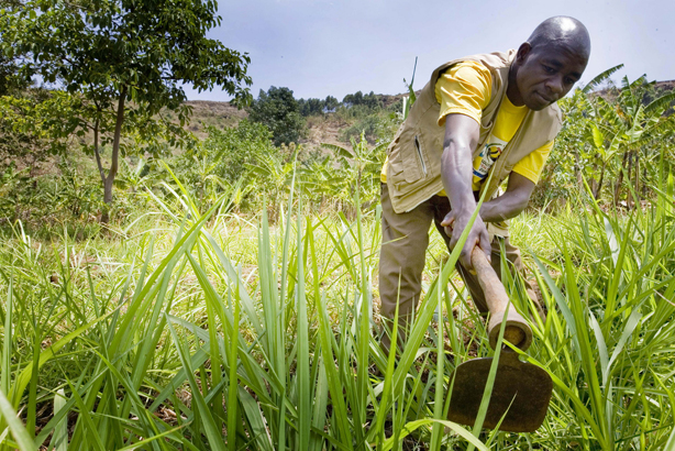 UN-report-farming-and-forestry