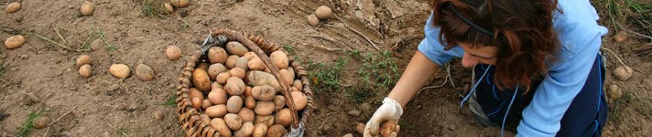 gender inequalities in agriculture