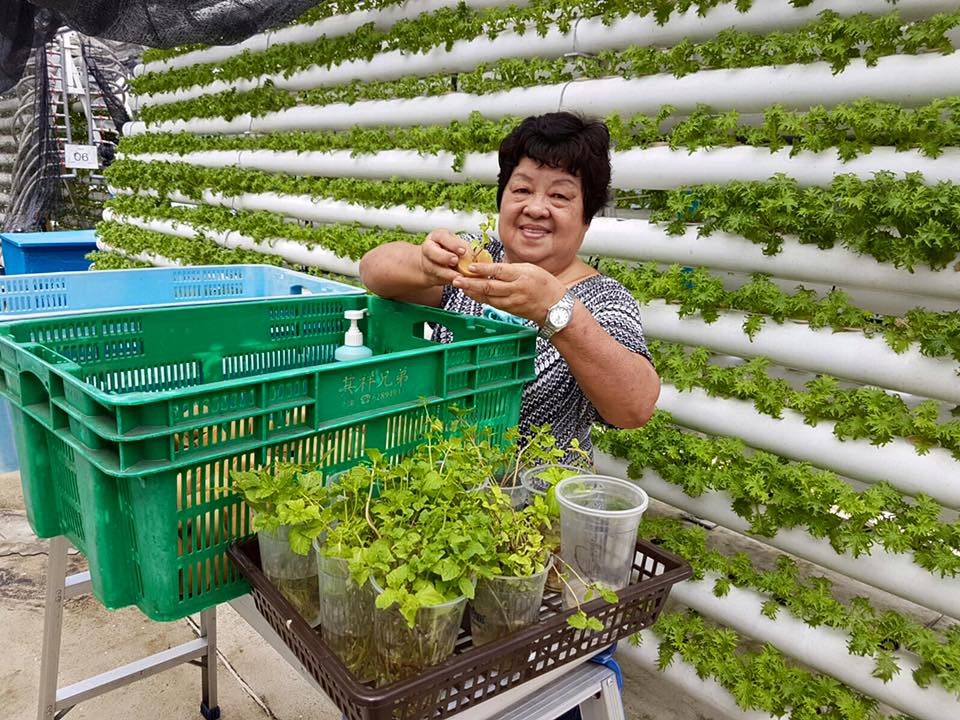 urban farming in Singapore