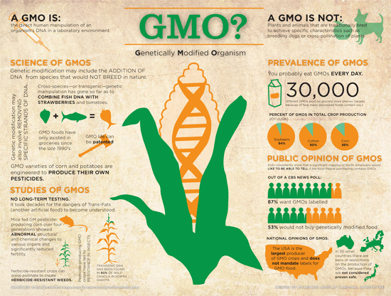 what are genetically modified organisms gmos uvm food feeduvm