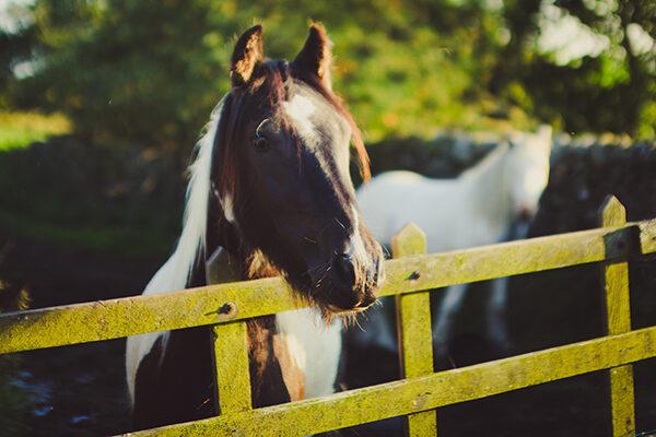 horses enjoy the view