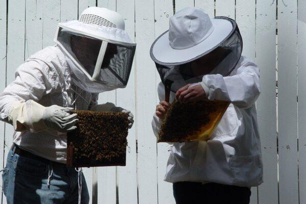 Beekeepers wearing beekeeping suits