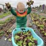 Baby throwing salad greens into a bucket
