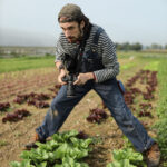 Jack Dempsey taking a picture in a row of lettuce in a garden/farm