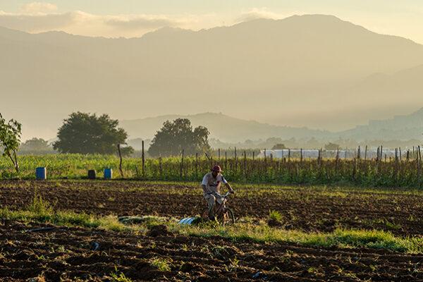 A farm field in Oaxaca, Mexico