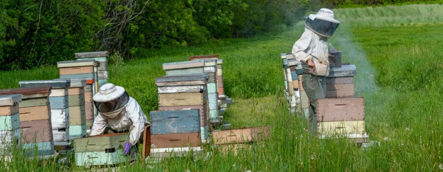 Bee keeping in a field