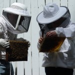 Could beekeeping hurt me and you?  (I'm not talking about getting stung)