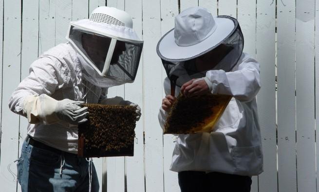 beekeeping-industry