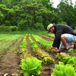 Claire Kremen on Organic Farming, Food Access and Sustainable Agriculture
