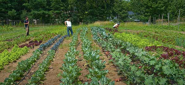 UVM Farmer Training Program fields being worked