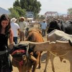 UVM Oaxaca Travel Program Sparks Alumna's Interest in Immigration Law