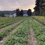 UVM Helps Farms, Consumers Find Middle Ground on Produce Safety