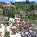botanical2 (1)