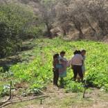Oaxaca Fields
