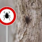 The Rise of Tick-Borne Illnesses in Vermont