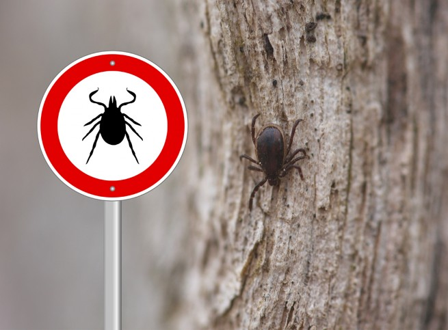 tick-borne illnesses in Vermont